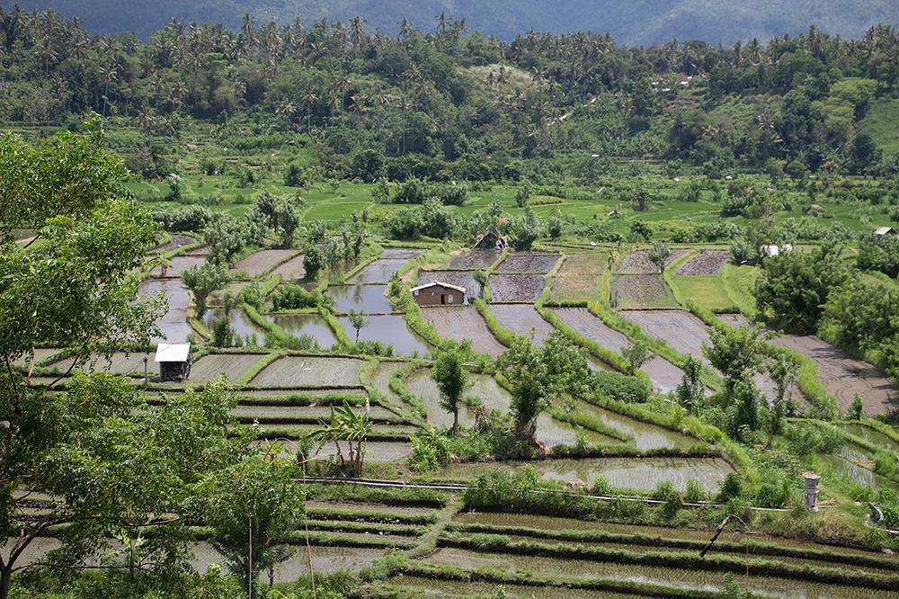 Bali mit Baby – Tipps 16