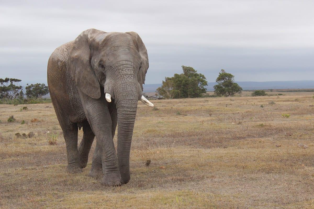 Südafrika mit Kindern auf Safari