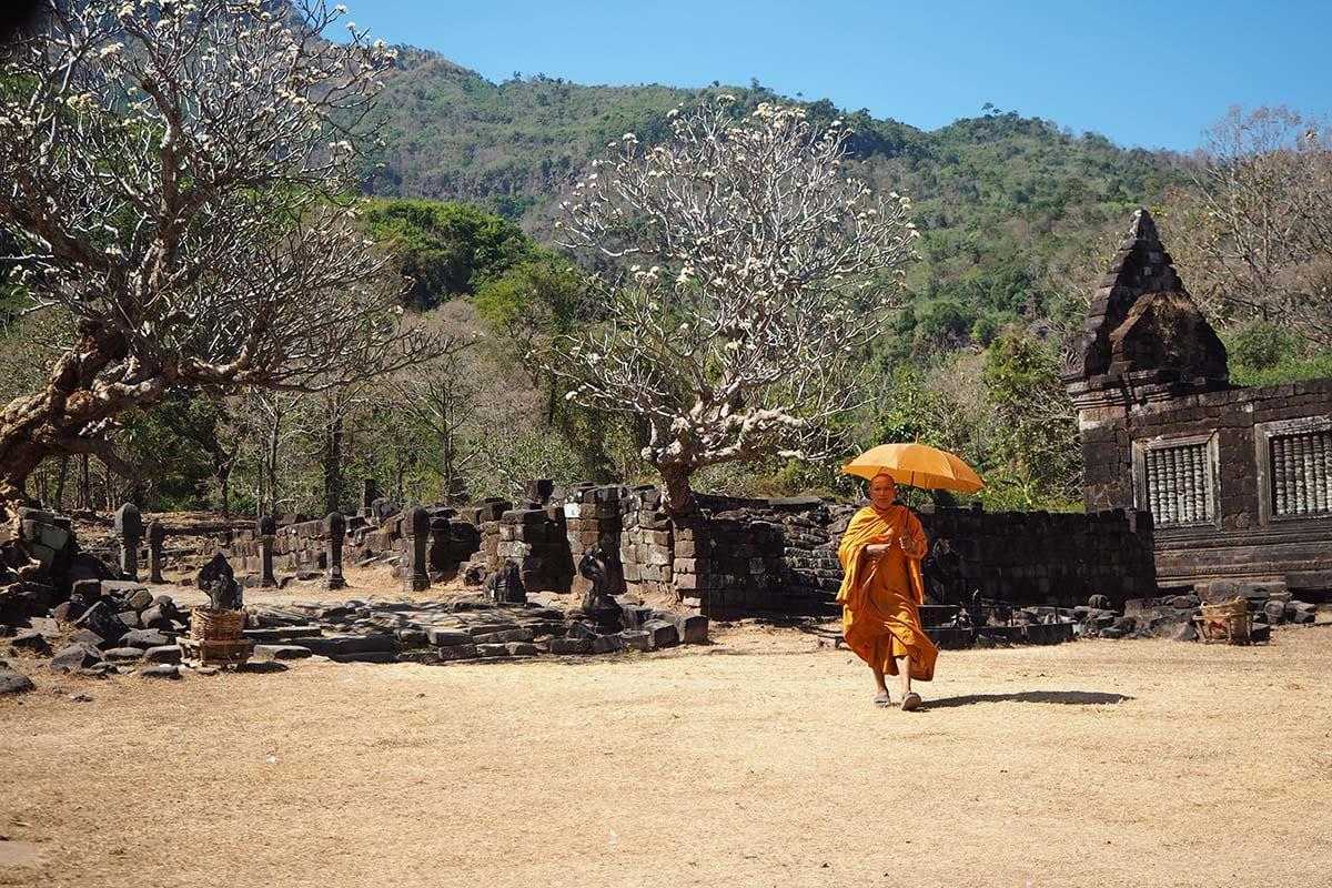 Individuelle Laos Reisen – blühende Frangipani-Bäume und Mönch in Wat Phu Champasak