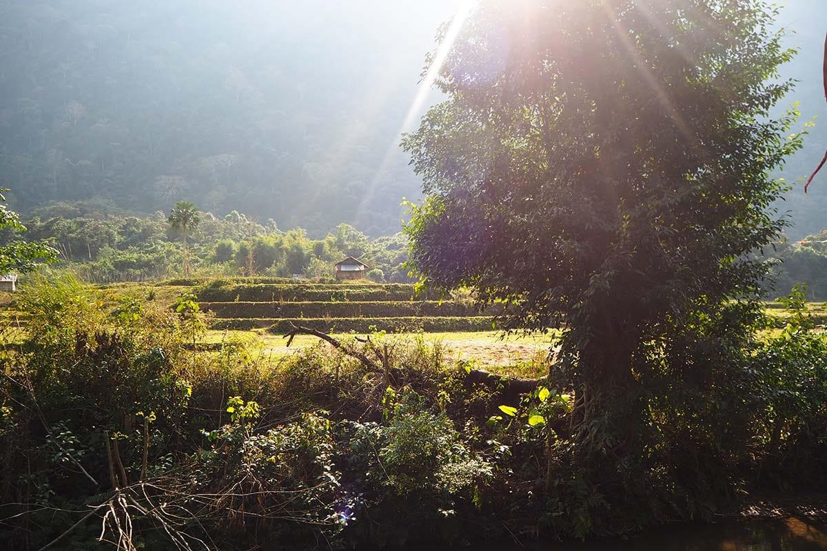 Individuelle Laos Reisen – Blick auf die Reisefelder in Muang Ngoy