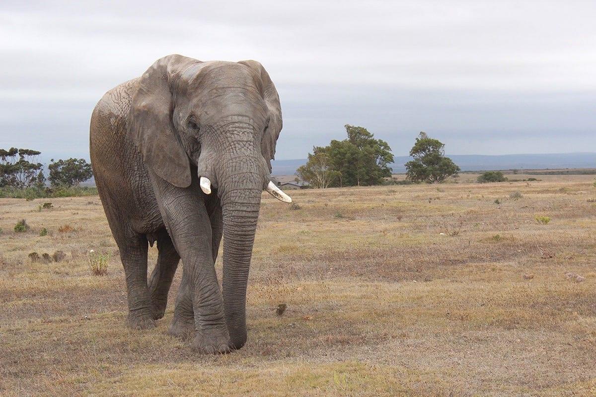 Fernreisen mit Kindern wohin? Beliebte Urlaubsziele für Familien – Südafrika, Safari mit Elefanten