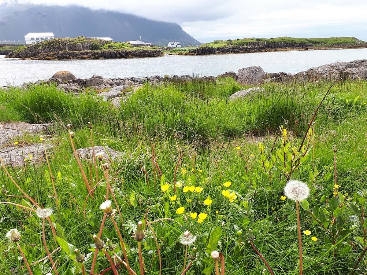 Außergewöhnliche Reiseideen in Europa mit Kindern – wunderschöne Landschaft in Island