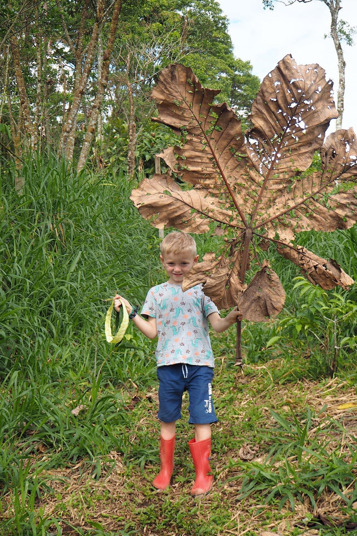 Amazonas mit Kind – riesige Blätter