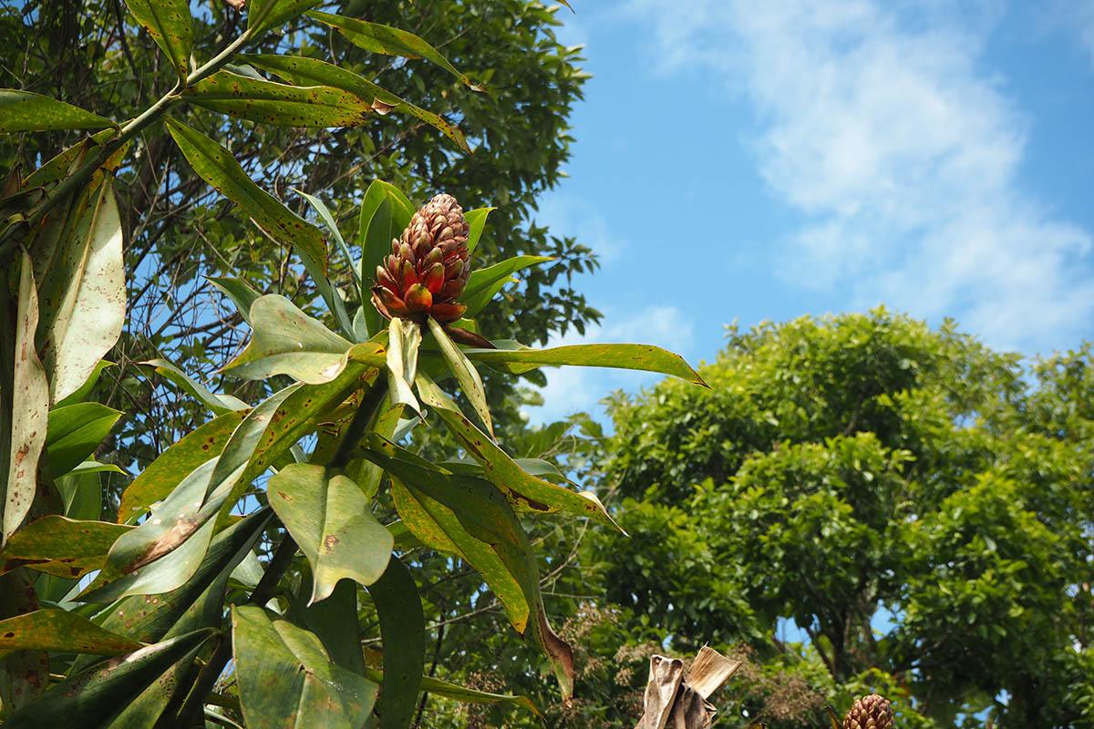 Ecuador Amazons – farbenprächtige Blüte