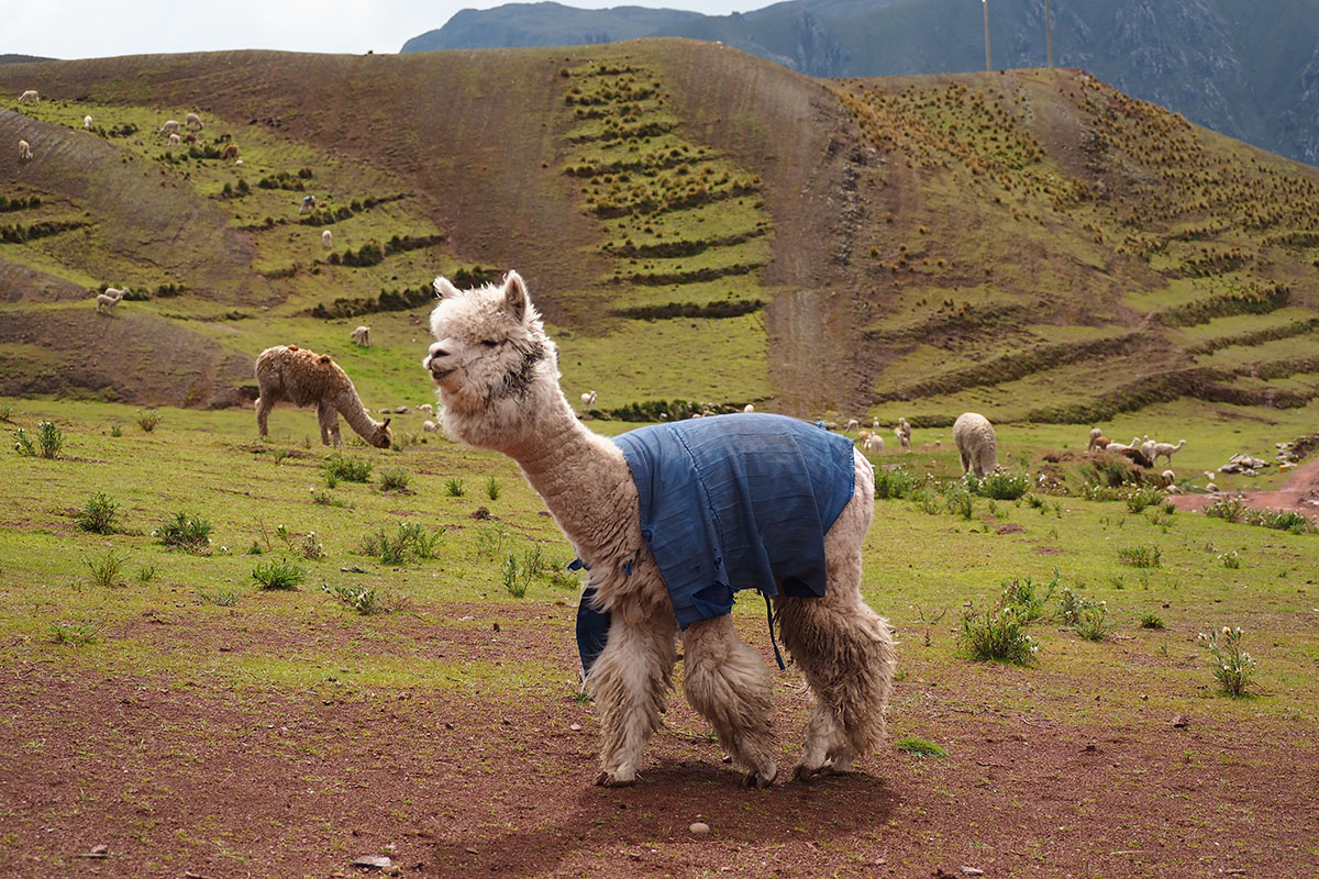 Landwirtschaft in den Anden